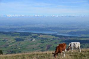 Chasseral, vue sur le lac de Bienne